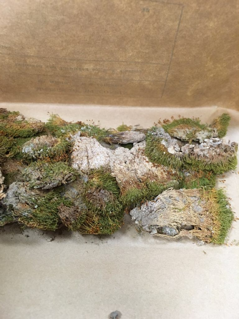 The mosses found in Birge Hall provide valuable information on the state's habitat during a time of increasing urbanization and industrialization.