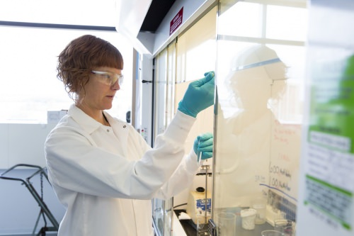 Photo: Scientist extracting bacteria sample