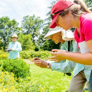 Maddie Rohr (right), an undergraduate student at UW–Madison, talks with Julie Melton about how to photograph bees.