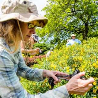 Sarah Warner, with the U.S. Fish and Wildlife Service, photographs a bee on a St. John's wort plant.