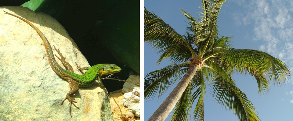 Photos: A lizard and a palm tree
