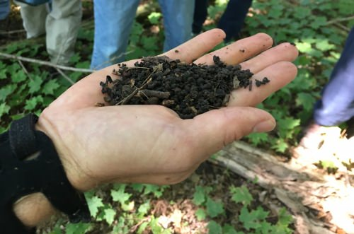 Photo: Herrick holding soil ground up by jumping worms
