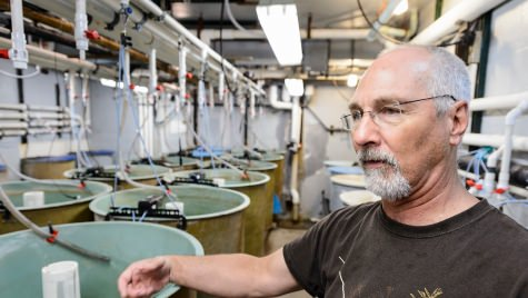 Terence Barry, senior scientist in animal science, shows one of many tanks of fish being studied at the Water Science and Engineering Laboratory at the University of Wisconsin-Madison on June 7, 2017. Barry is a university expert in aquaculture and the stress response in fish. (Photo by Jeff Miller / UW-Madison)