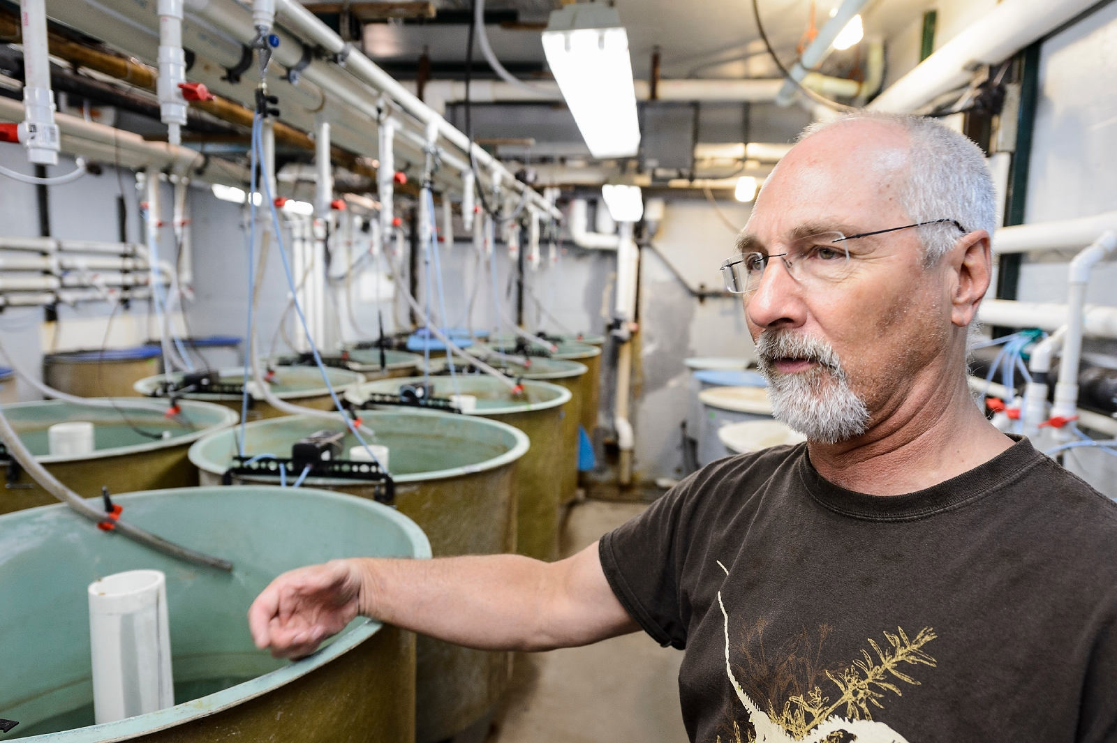 Terence Barry, senior scientist in animal science, shows one of many tanks of fish being studied at the Water Science and Engineering Laboratory at the University of Wisconsin–Madison on June 7, 2017. Barry is a university expert in aquaculture and the stress response in fish. (Photo by Jeff Miller / UW–Madison)