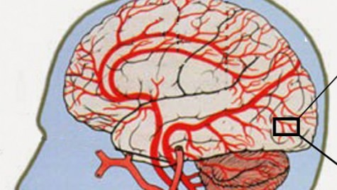 Graphic: Diagram of human brain