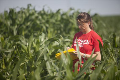 Photo: Natalia de Leon taking notes in cornfield