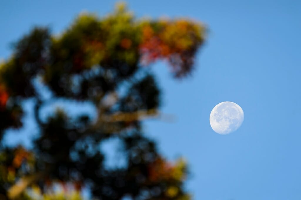 Photo: Fading moon by tree with colorful leaves