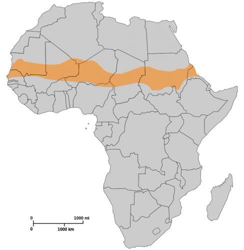 Graphic: Outline map of Africa with Sahel location indicated