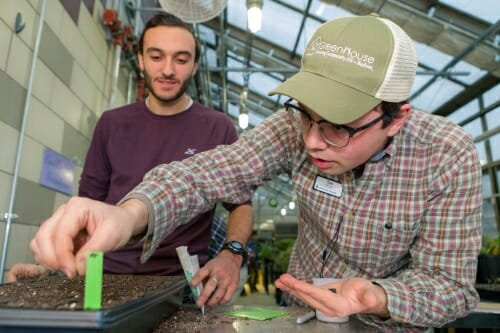 Photo: Student in GreenHouse cap planting seed in box