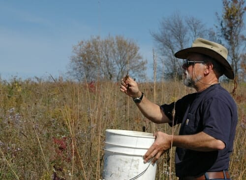 Photo: Steve Carpenter collecting Indian Grass seed in an effort to restore native prairie on a parcel of land he owns west of Madison. He maintains a small cabin on the property, where he also hunts. Courtesy of Steve Carpenter