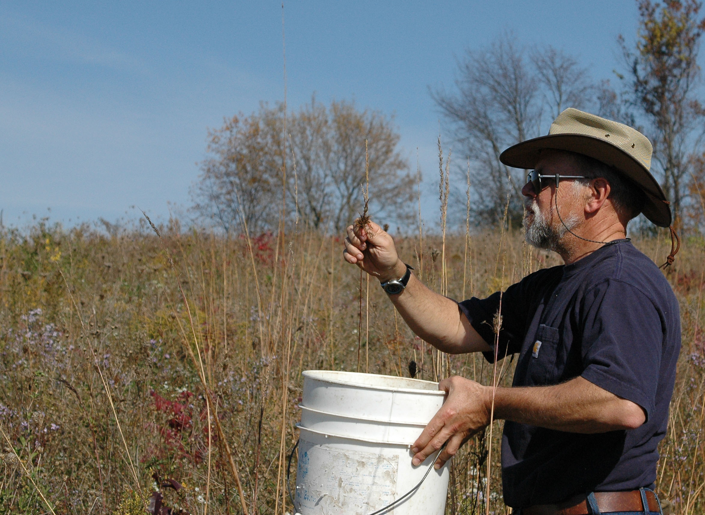 610a6e6dc2bd77 Photo: Steve Carpenter collecting Indian Grass seed in an effort to restore  native prairie on