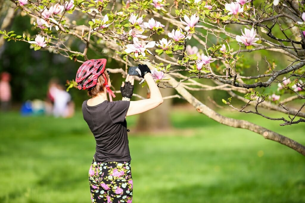 Photo: Woman in bike helmet photographing tree