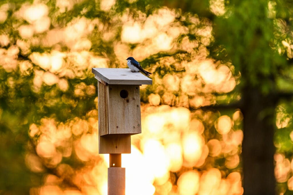 Photo: Bird atop a birdhouse