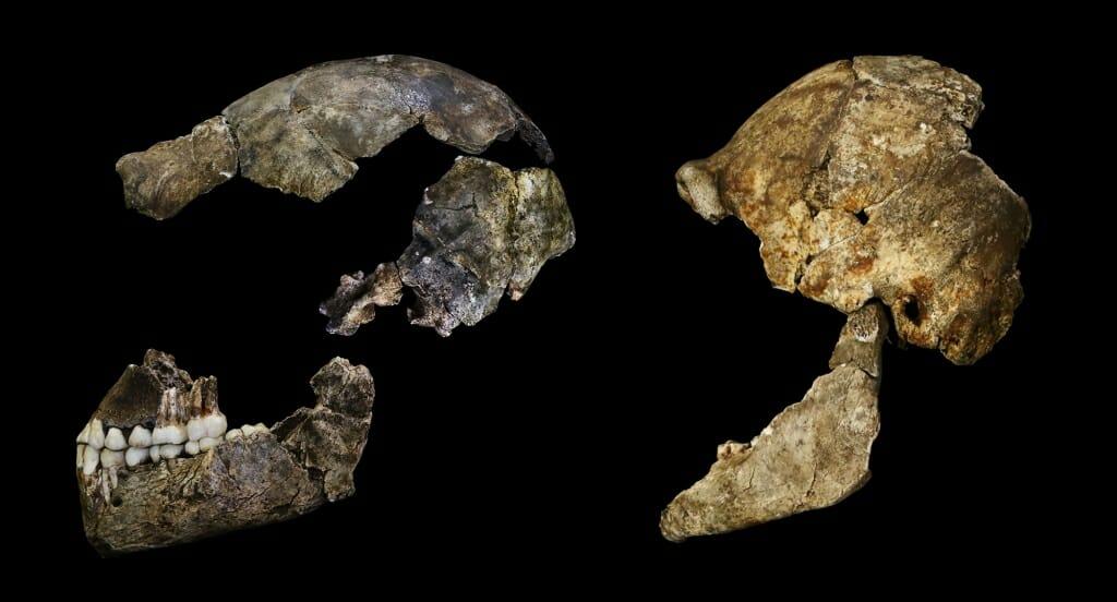Photo: 2 skulls