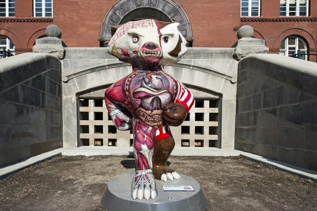Photo of Visible Bucky, a statue which shows the right half of Bucky in his traditional red and white garb and the left half as his internal anatomy.