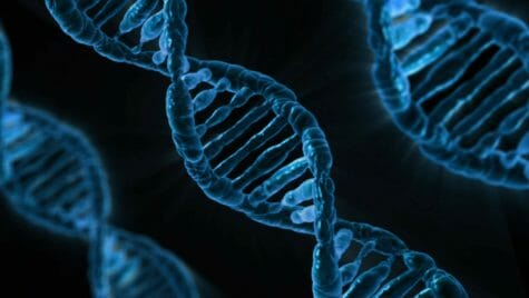 Photo: Strands of DNA