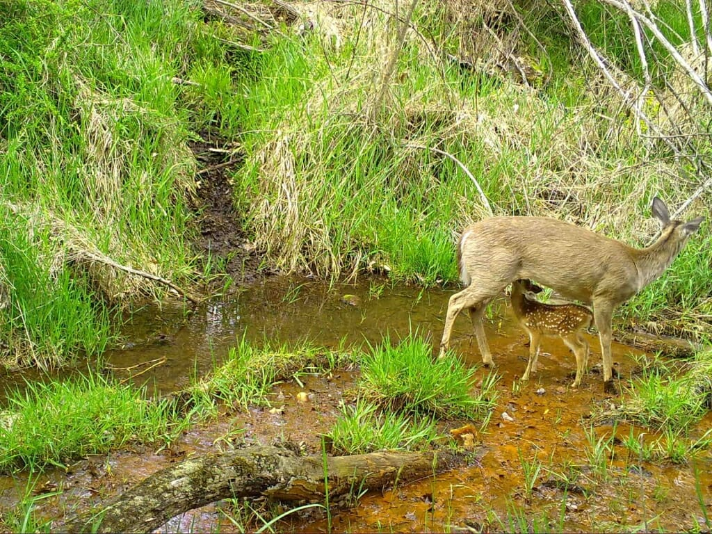 Trail cam project Snapshot Wisconsin goes statewide