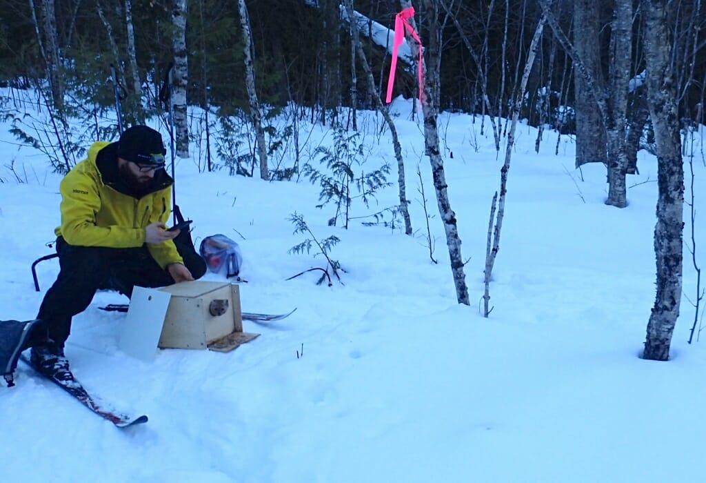 Photo: Man crouching behind box with marten emerging