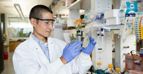 Photo: Sato wearing safety glasses, lab coat and rubber gloves, looking at yeast in a petri dish