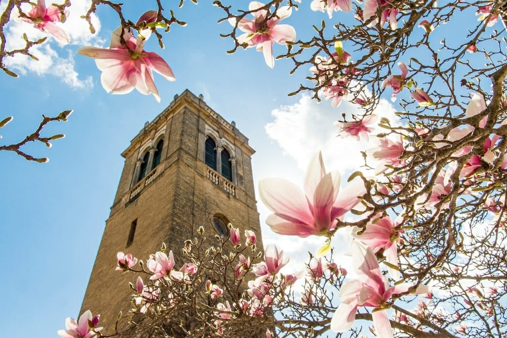 Photo: Carillon Tower framed by flower blossoms