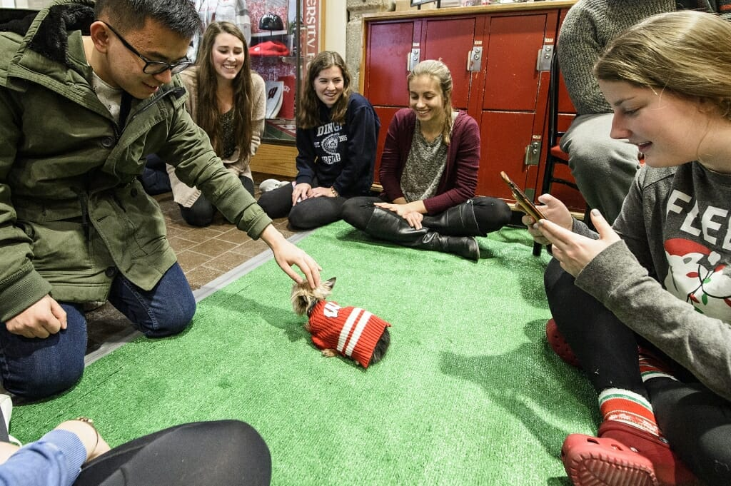 Nugget, a Yorkie, wears the school colors as he's petted by students taking part in the de-stress session.