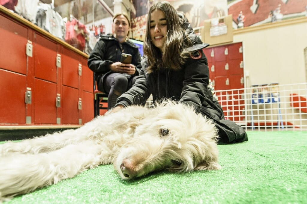 Charlie seems to be enjoying the petting as much as the students, who are taking a break from studying for finals.