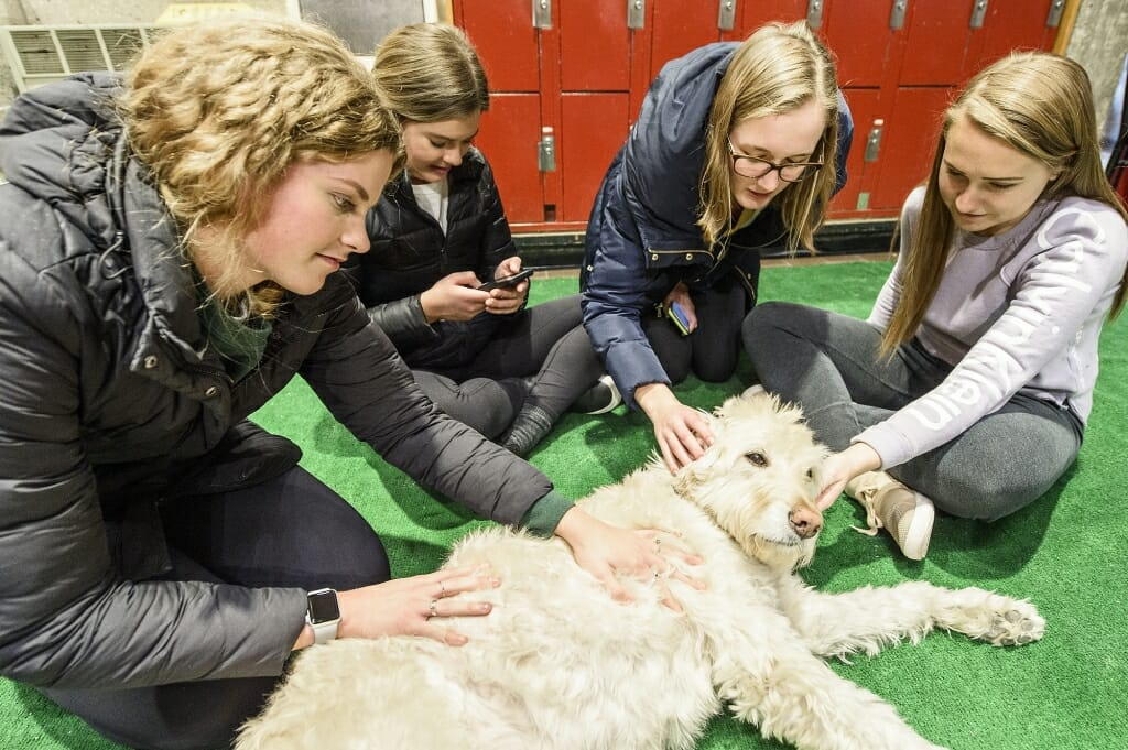 Charlie, a goldendoodle, is petted by students taking part in a Paws and Relax de-stress session hosted by the University Bookstore on Dec. 13.