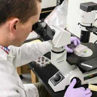 Scientist Andy Petersen uses a microscope to look at stem cell cultures.