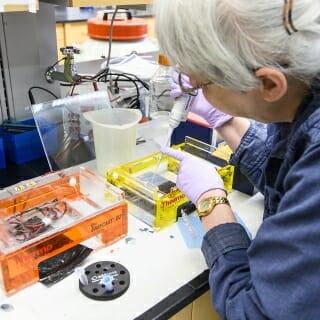 Scientist Cheryl Soref prepares a gel electrophoresis test.
