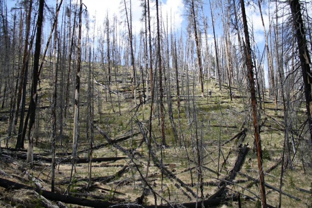 Photo: Burned trees