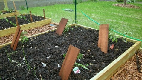 Vegetable gardens located close to buildings painted before 1978 may contain lead. The new soil placed in these raised beds should reduce any lead exposure.
