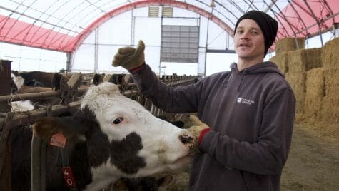 Photo: A man stands next to a cow.