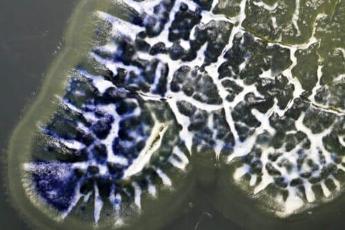 A closeup of a purplish antibiotic.