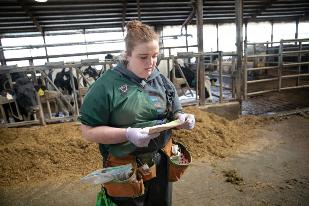 Photo: Megan reading a piece of paper in front of cows