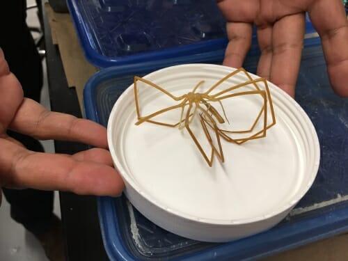 Photo: Closeup of sea spider in a dish