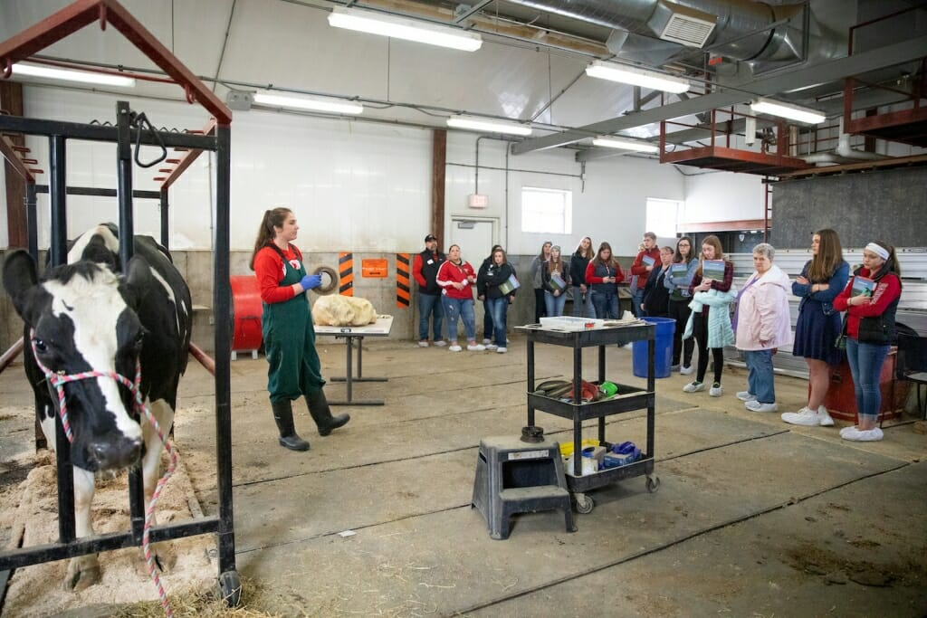 Photo: In a cattle barn with cow visible, an instructor talks to about a dozen students.