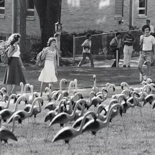 One of the most memorable scenes on Bascom Hill was the pink flamingo prank by the student government Pail and Shovel Party during the first week of classes in 1979.