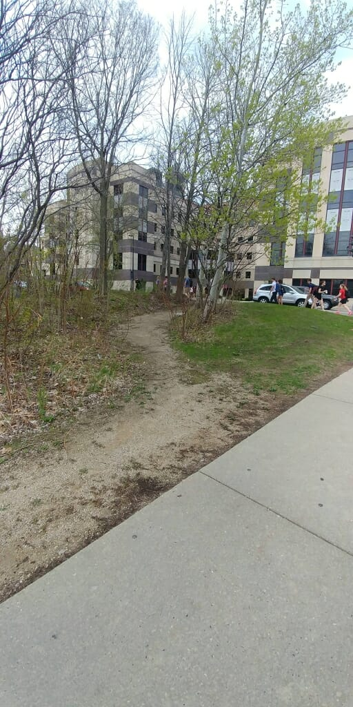 A large desire path, turned to gravel, links two sidewalks in front of Grainger Hall.