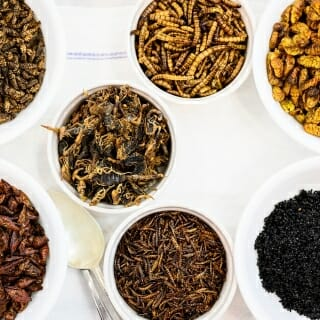 Pictured clockwise from upper left are bowls of dried adobo-flavored Chapulines (grasshoppers), super mealworms, silkworm pupae, black ants, mealworms, roasted crickets and Manchurian scorpions (at center).