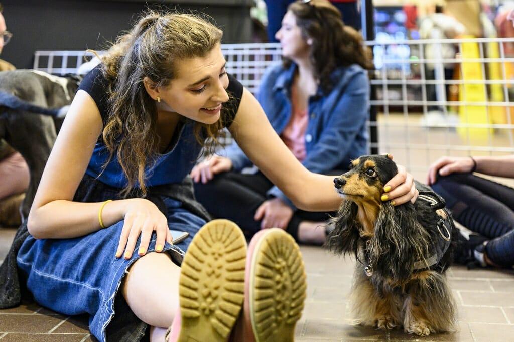 Photo: A woman pets a dachshund.