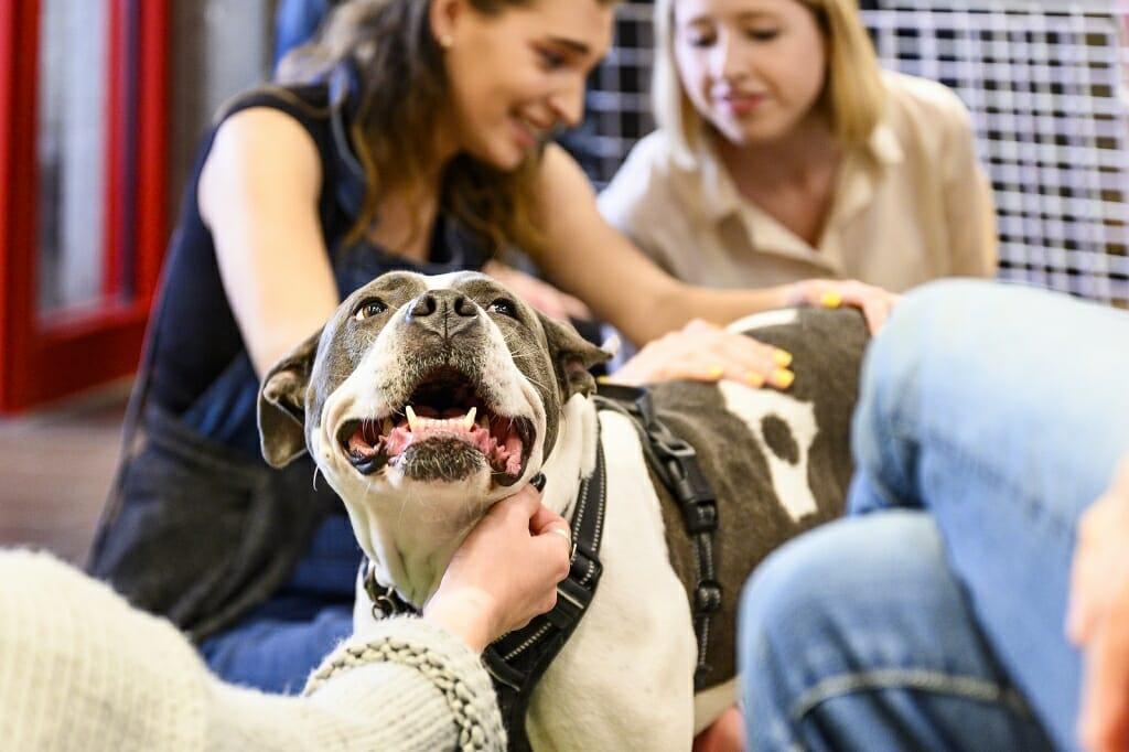 Photo: A pitbull mix is patted by three students simultaneously.