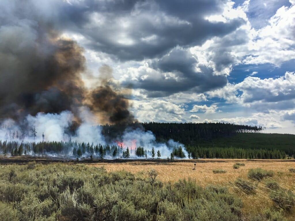 Photo: Fire burning trees