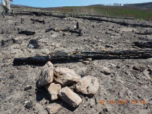 Photo: The pile of rocks with the nail in the middle signifies a long-term study plot Monica Turner and her research group established at Yellowstone National Park in 1990 following the park's historic 1988 fires. This same plot burned again in 2016. Historically, fires burn in Yellowstone only every 100 to 300 years.