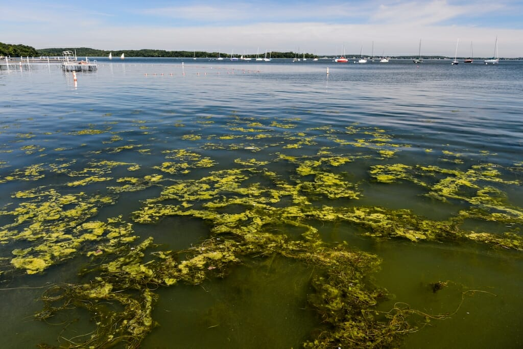 Photo: Algae on surface of lake