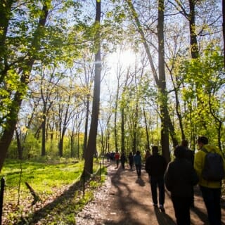 13 May, 2019.  Early morning sunlight illuminates young leaves along the trail to Picnic Point. The 2019 Wisconsin Idea Seminar began its five-day journey on the legendary path flanked by the waters of Lake Mendota with a Ho-Chunk cultural landscapes walking tour to learn about the significance of the region's lakes to Ho-Chunk people and their ancestors. (Photo by Catherine Reiland/UW-Madison)