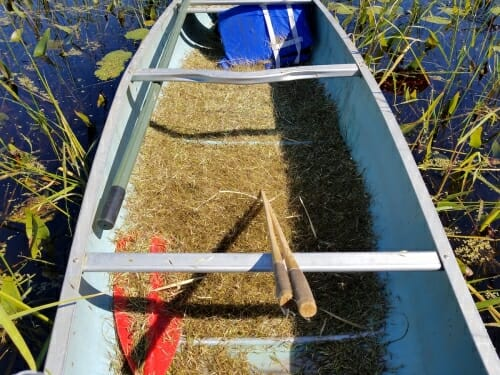 Photo: Canoe on the water filled with wild rice