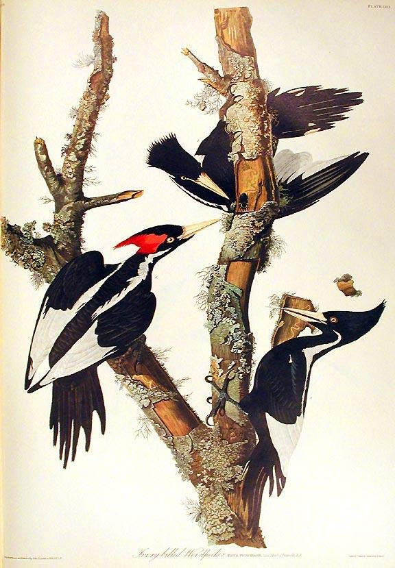 Painting: Woodpeckers on tree branches