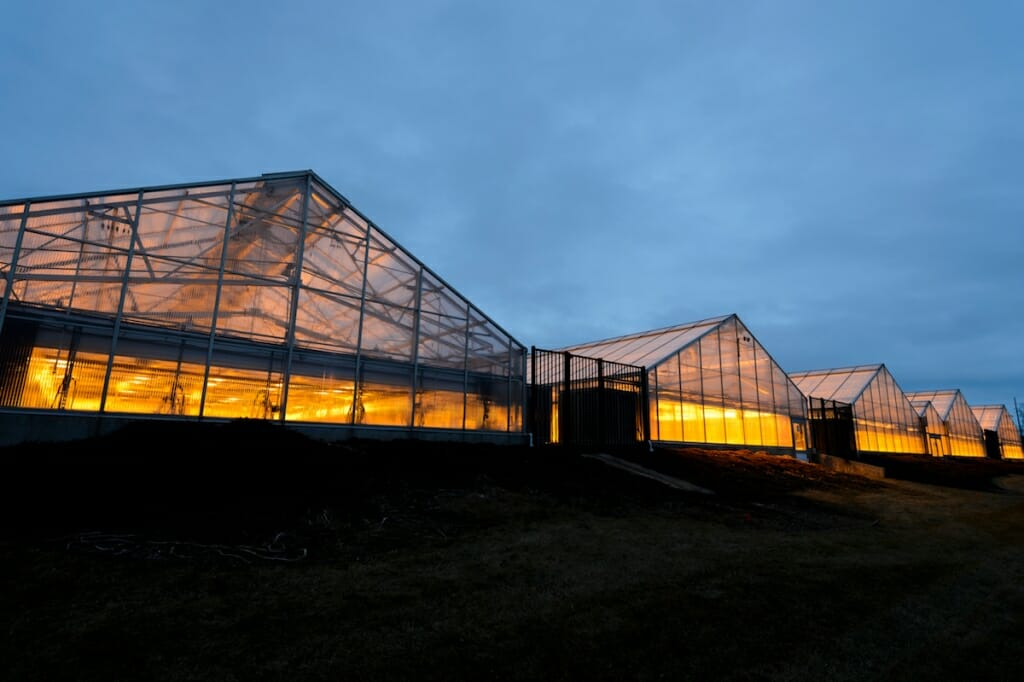 Photo: Exterior of greenhouses lit up at dusk