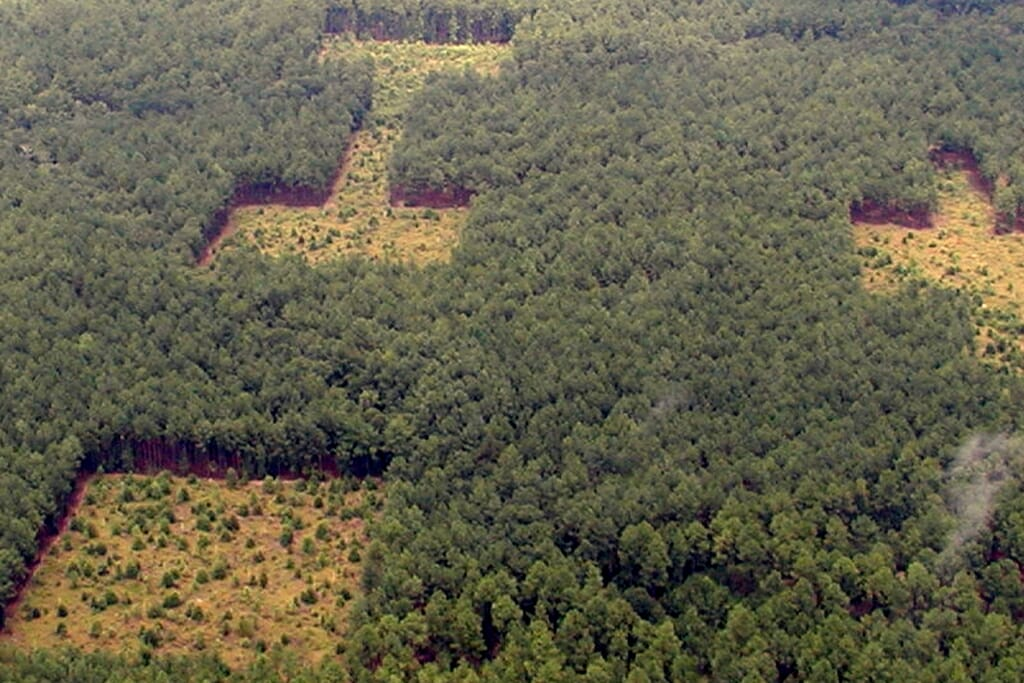 Photo: Aerial photo of trees