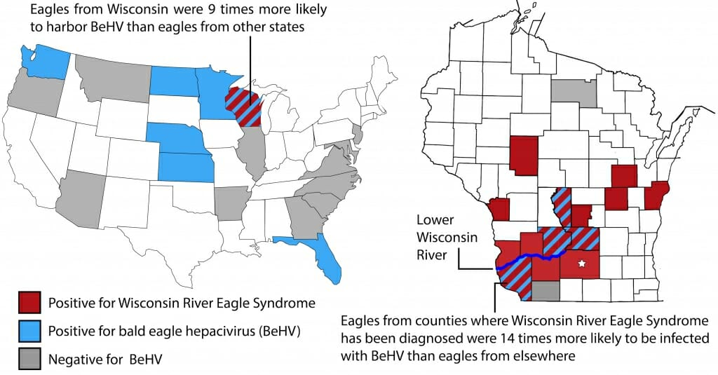 Graphic: Maps of U.S. and Wisconsin showing where diseased eagles were found